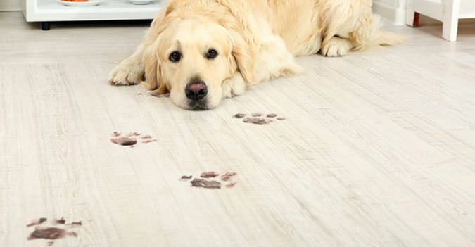 Pet Friendly Flooring Archives: friendly floors