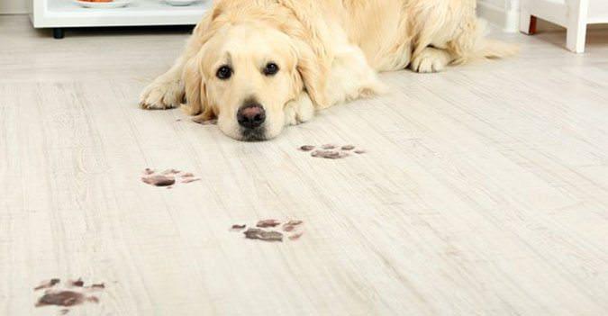 Pet friendly flooring archives Friendly floors