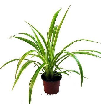 House Plants Archives Tampa Homes For Sale