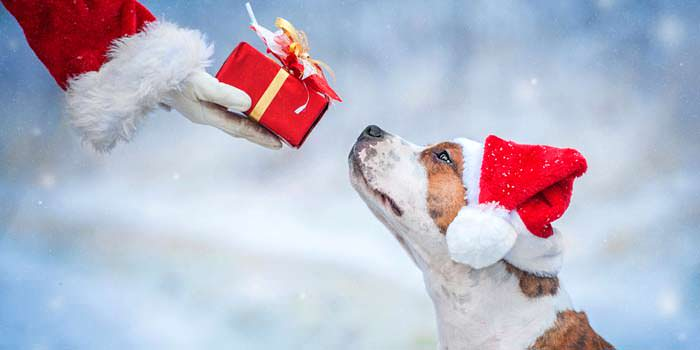 Holiday Gifts That You Plus Your Pet Will Surely Enjoy