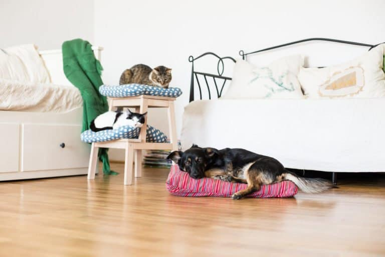 4 Sensible Pet Guidelines for Apartment Living