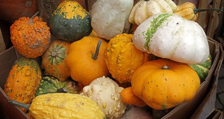 Secrets and techniques for Growing Gourds