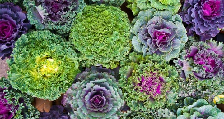 Cold-Hardy Plants Increase Color to Winter Gardens