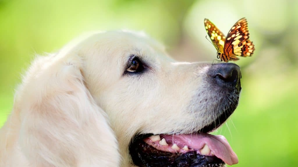 Seasonal Upgrades: Pet-Proofing Your Home This Spring