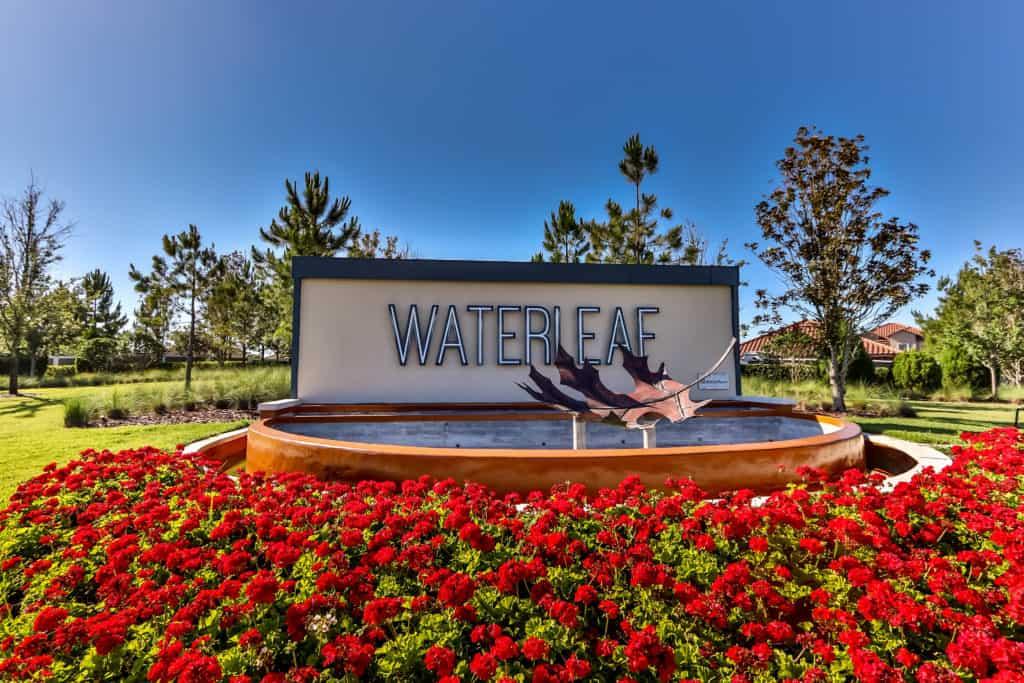 Waterleaf