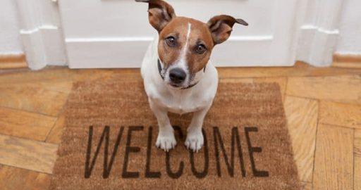 7 Indicators of a Dog friendly House