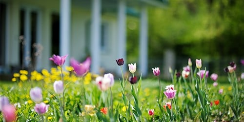 Spring Into Your March Home Maintenance